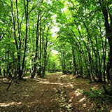 Farum har flere dejlige skov og naturområder